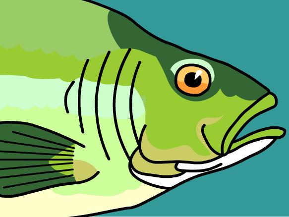 Fins clipart fish gill #2 - Fish Gills PNG
