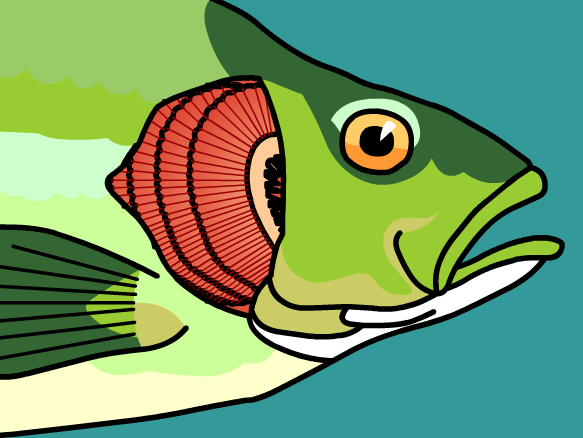 Lesson Ideas - Fish Gills PNG