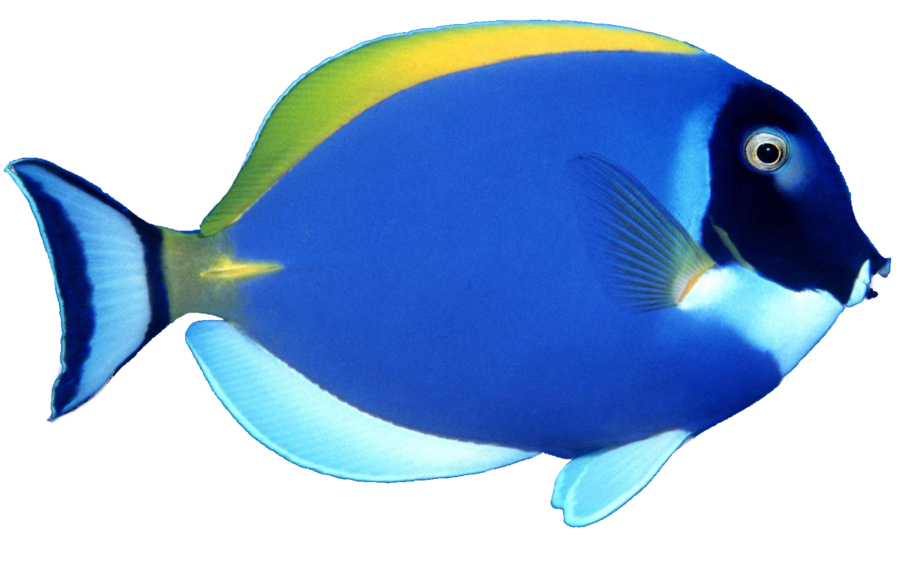 Blue Fish png by mysticmorning PlusPng.com  - Fish HD PNG