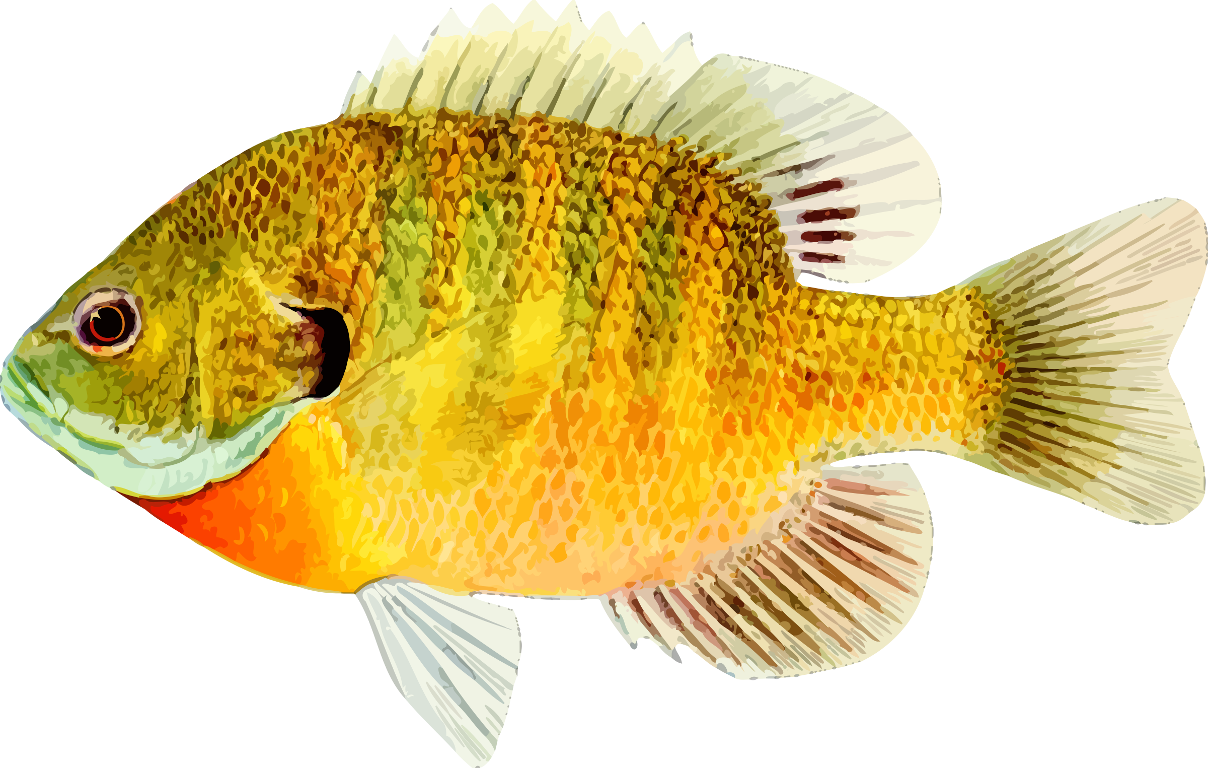 Fish 8 - Fish HD PNG