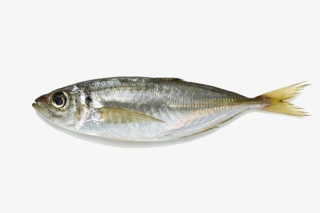 Fish, Fish, Hd Fish, A Fish PNG Image - Fish HD PNG