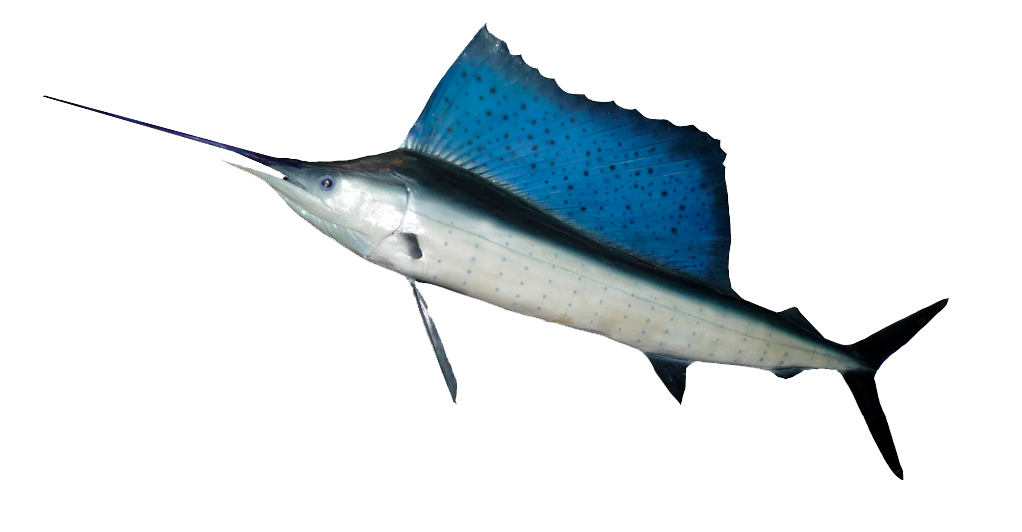 Fish HD PNG