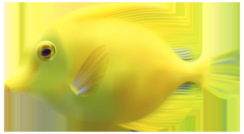 Fish PNG - 5040