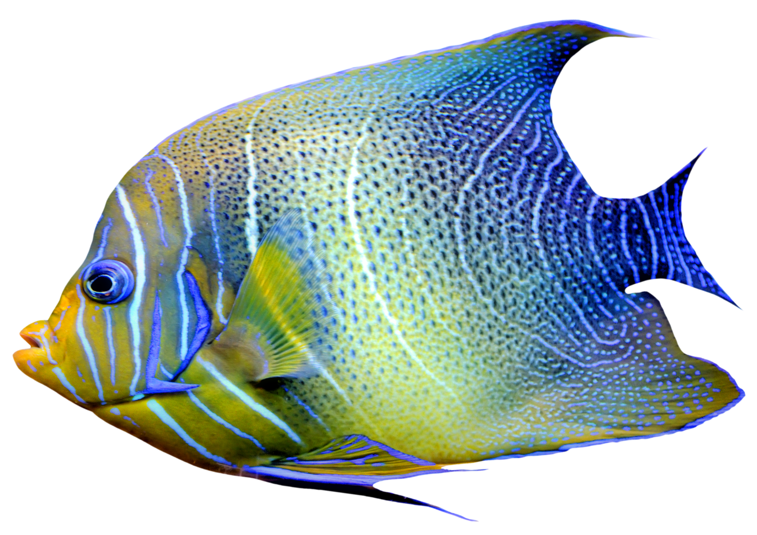 Fish PNG - 5047