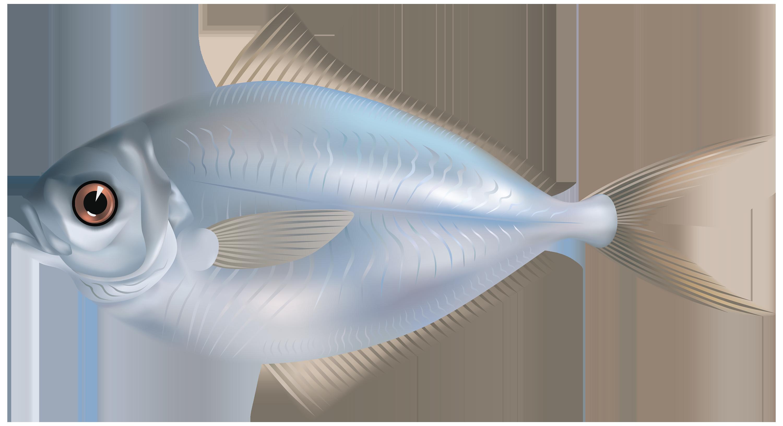 Fish PNG - 5052