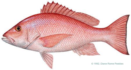 Fish PNG - 5055