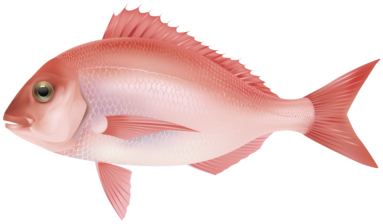 Fish PNG - 5039