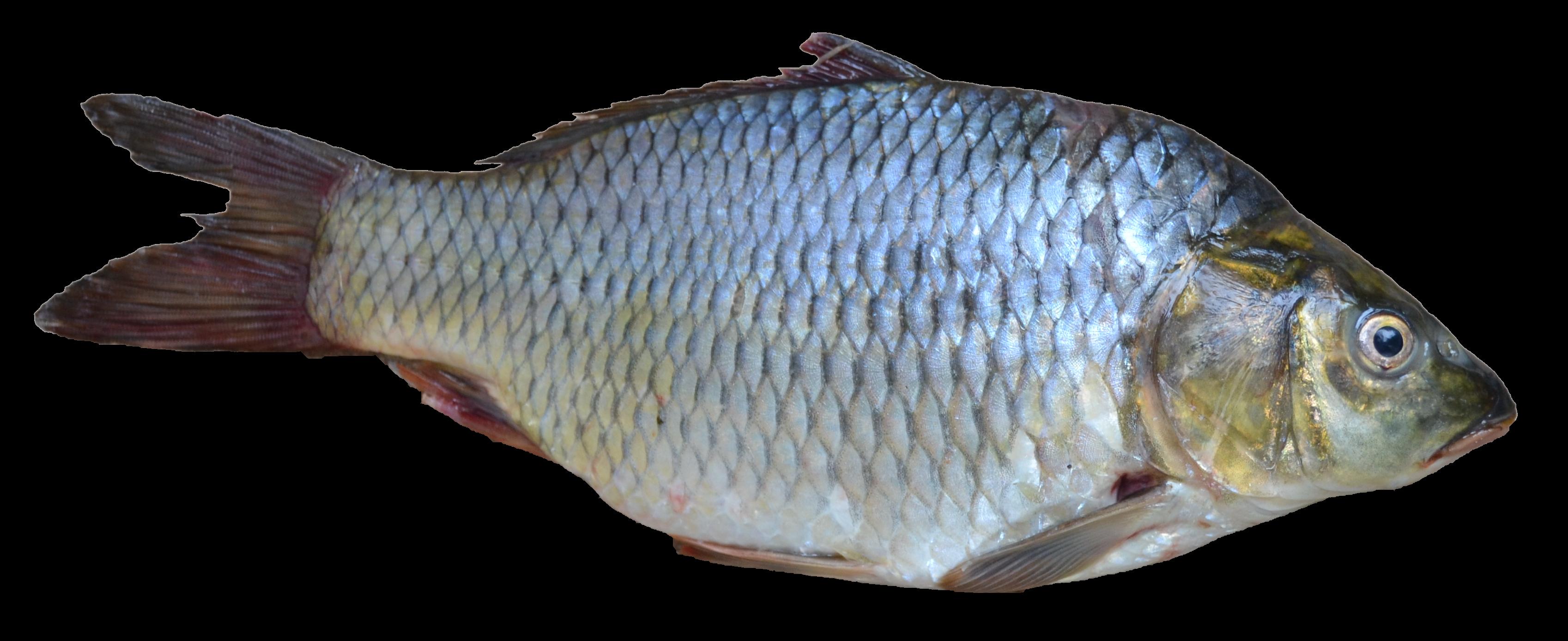 Fish PNG - 5043