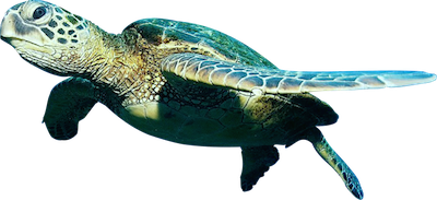 Ocean Fish PNG Free Download - Fish PNG