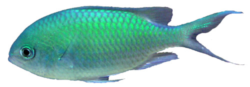 Ocean Fish PNG Transparent - Fish PNG