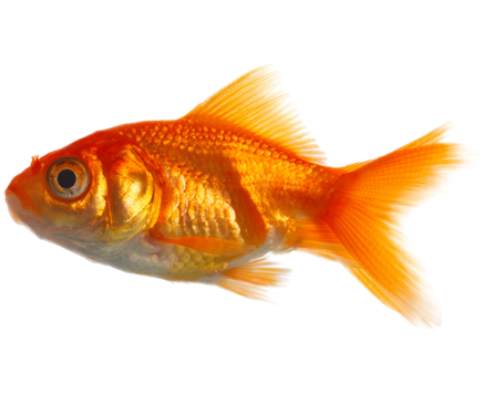 Real Fish PNG Image - Fish PNG