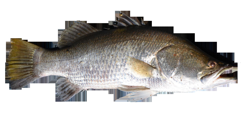 Fish PNG - 5041
