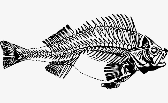 Vector Fishbone, Fish Bone, Vector Free Download, Skeleton Free PNG and  Vector - Fishbone PNG HD