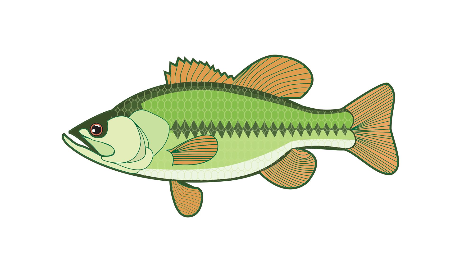 Pro Fishing Rigs - Fishing HD PNG