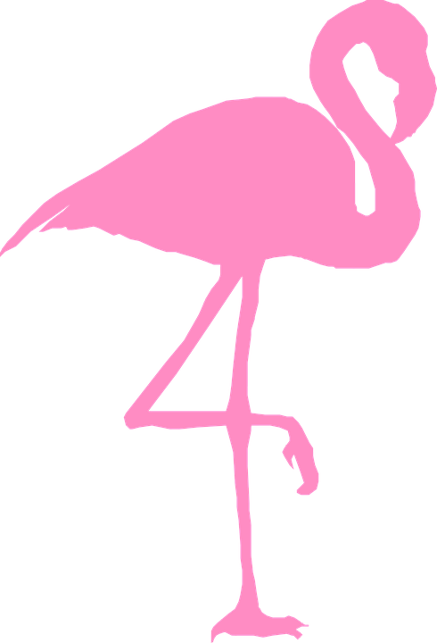 Flamingo, Bird, Silhouette, Pink, Nature, Wildlife, Zoo - Flamingo PNG
