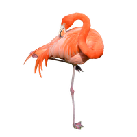 Flamingo Free Download Png PNG Image - Flamingo PNG