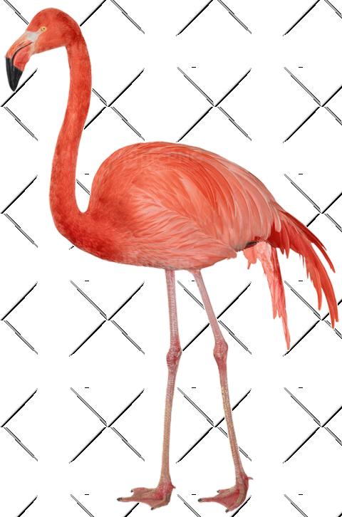 Flamingo HD PNG - 90738