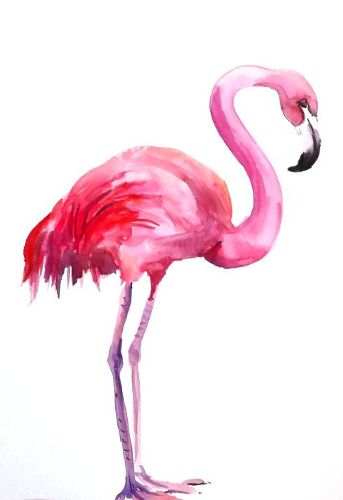 Flamingo HD PNG - 90736