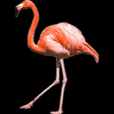 Flamingo HD PNG - 90730