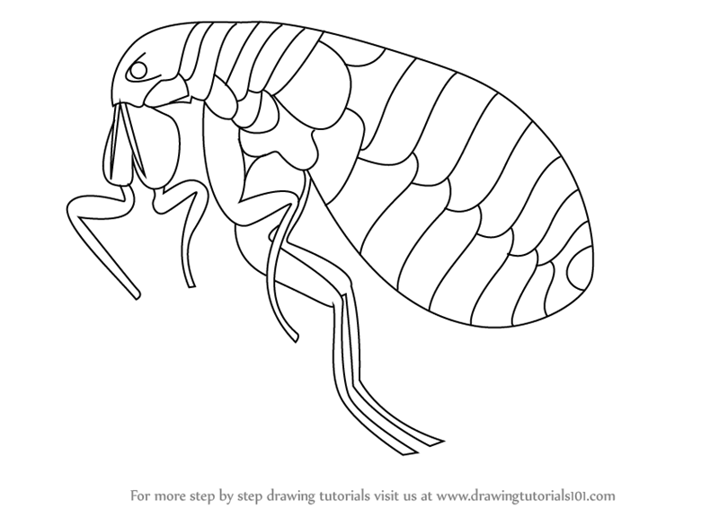 Flea PNG Black And White-PlusPNG.com-800 - Flea PNG Black And White