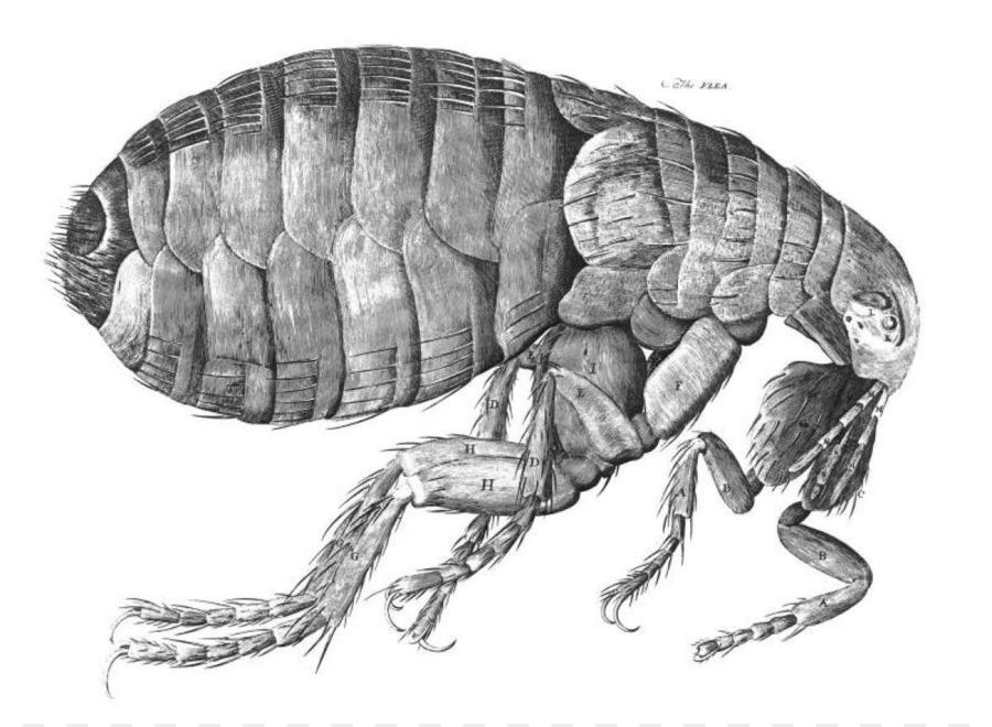Black Death Rat Bubonic plague Flea - flea - Flea PNG Black And White