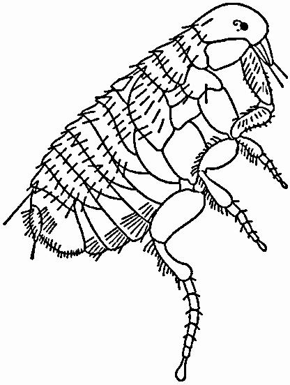 flea 2 - Flea PNG Black And White