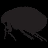 Flea PNG - Flea PNG Black And White