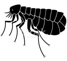flea side view vector illustration in black and white - Flea PNG Black And White