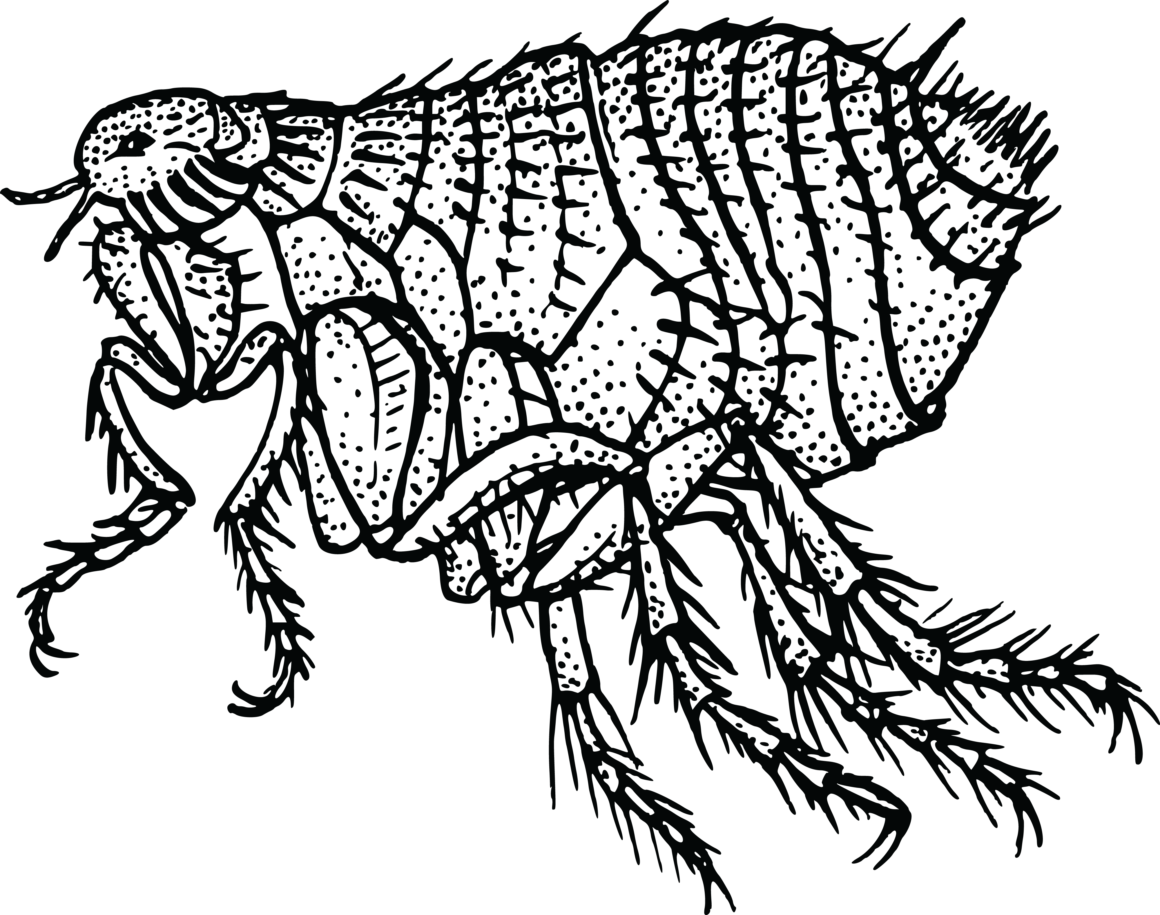Free Clipart Of A flea #0001705 . - Flea PNG Black And White