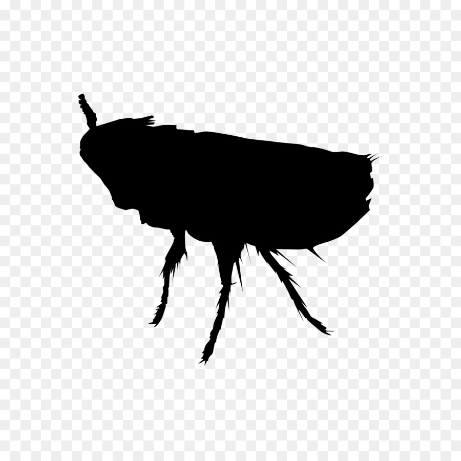 Perth Insect Rat Cockroach Pest - flea - Flea PNG Black And White