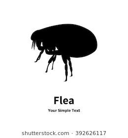 Vector illustration of black fleas icon. Isolated silhouette on a white  background. Flea is - Flea PNG Black And White
