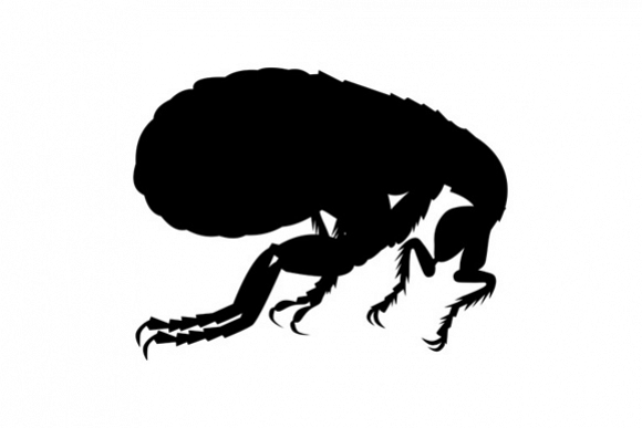 Viewing Product. Flea Silhouette - Flea PNG Black And White