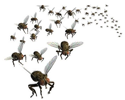Flies PNG - 22666
