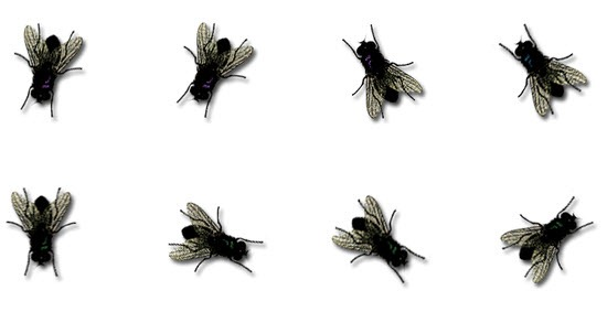 Flies PNG - 22662