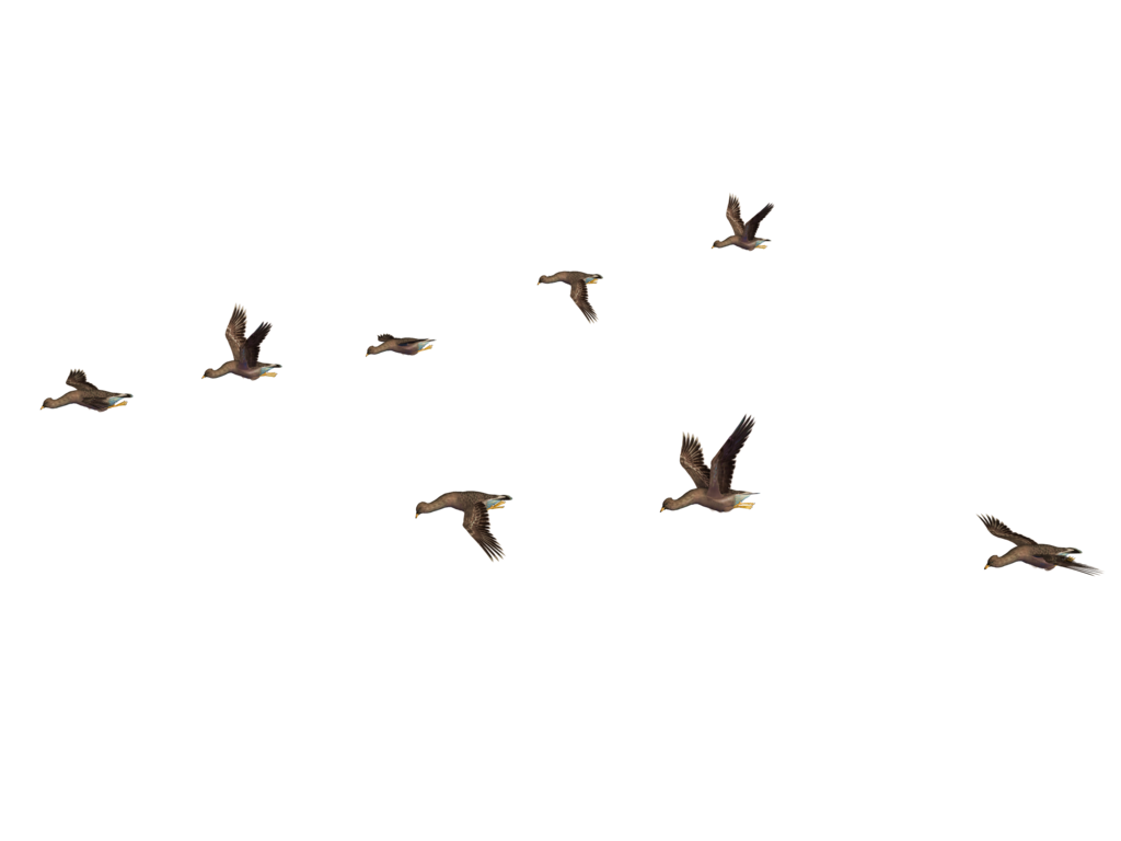 Birds PNG File