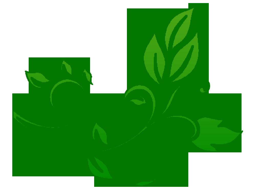 Floral PNG - 14926