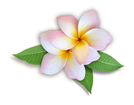 Plumeria Flowers Png HD - Flower HD PNG