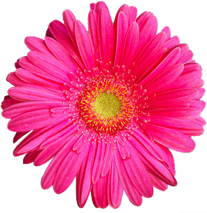ADOBE PHOTOSHOP .PNG , COLORFUL-FLOWER , FLOWER.PNG , HTTP:/ - Flower PNG
