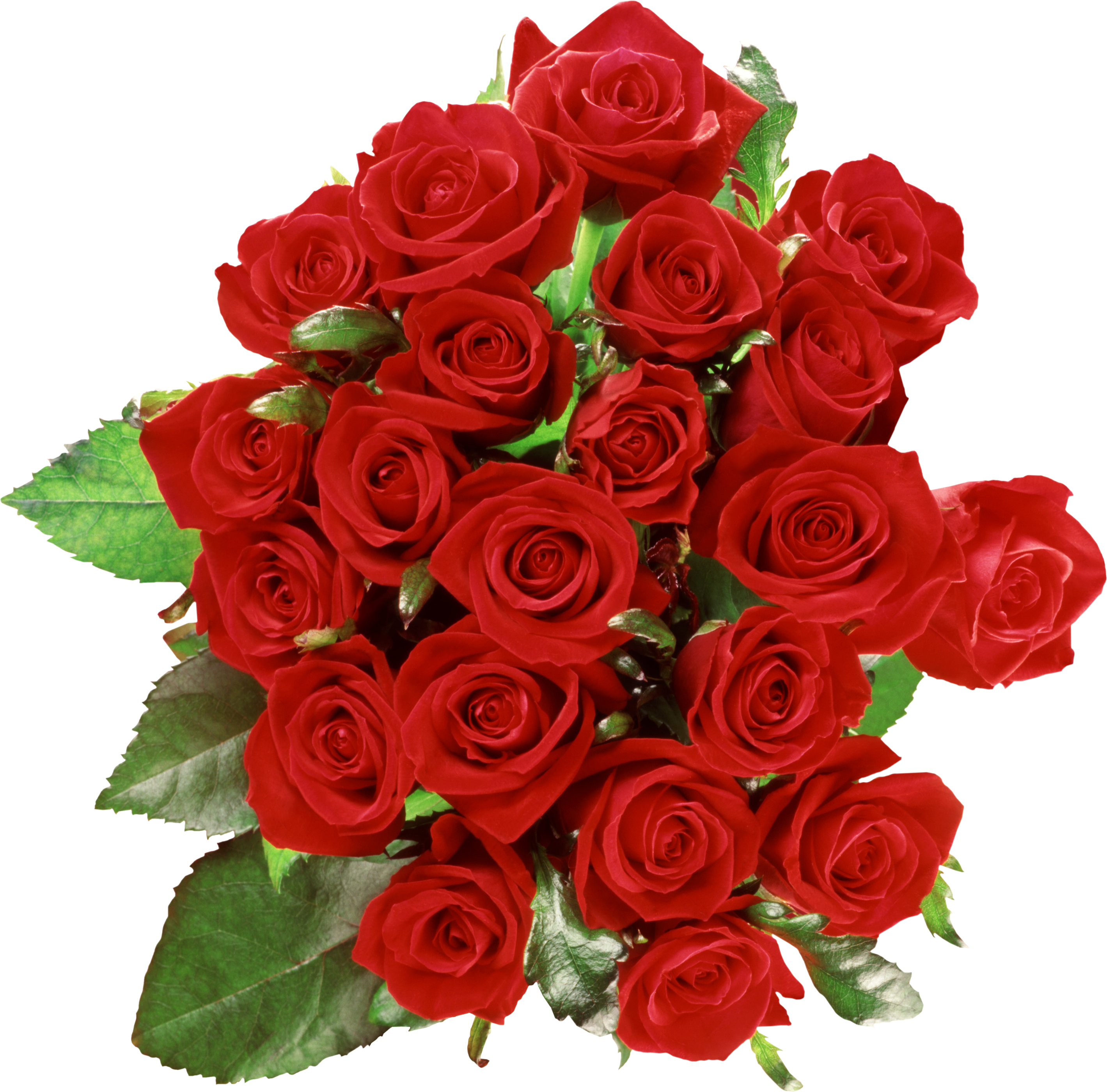 Bouquet of roses PNG image, free picture download - Flower PNG