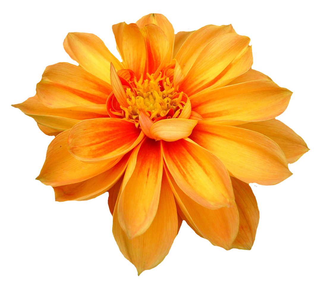Flower PNG Transparent Flower.PNG Images.