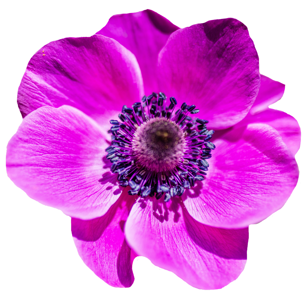 Flower PNG Transparent Image - Flower PNG