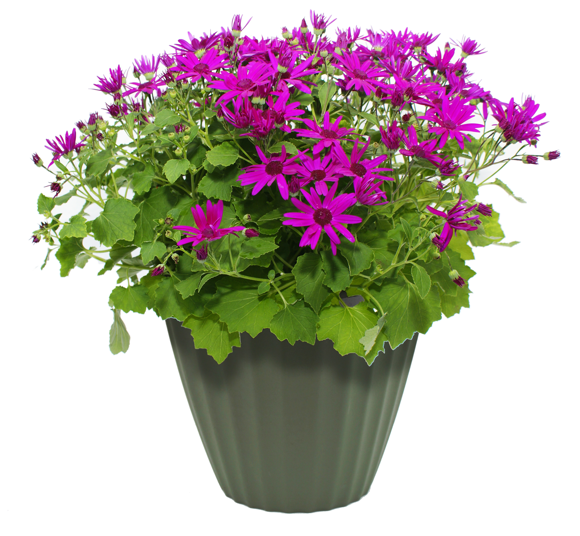 Flower Pot PNG-PlusPNG.com-1920 - Flower Pot PNG