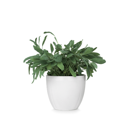 Flower Pot PNG-PlusPNG.com-460 - Flower Pot PNG