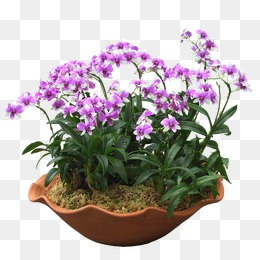 Bonsai, Flowers, Greenery, Potted PNG and PSD - Flower Pot PNG