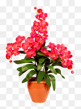 Flower Pot, Flower Pot, Potted, Red Flowers PNG Image - Flower Pot PNG