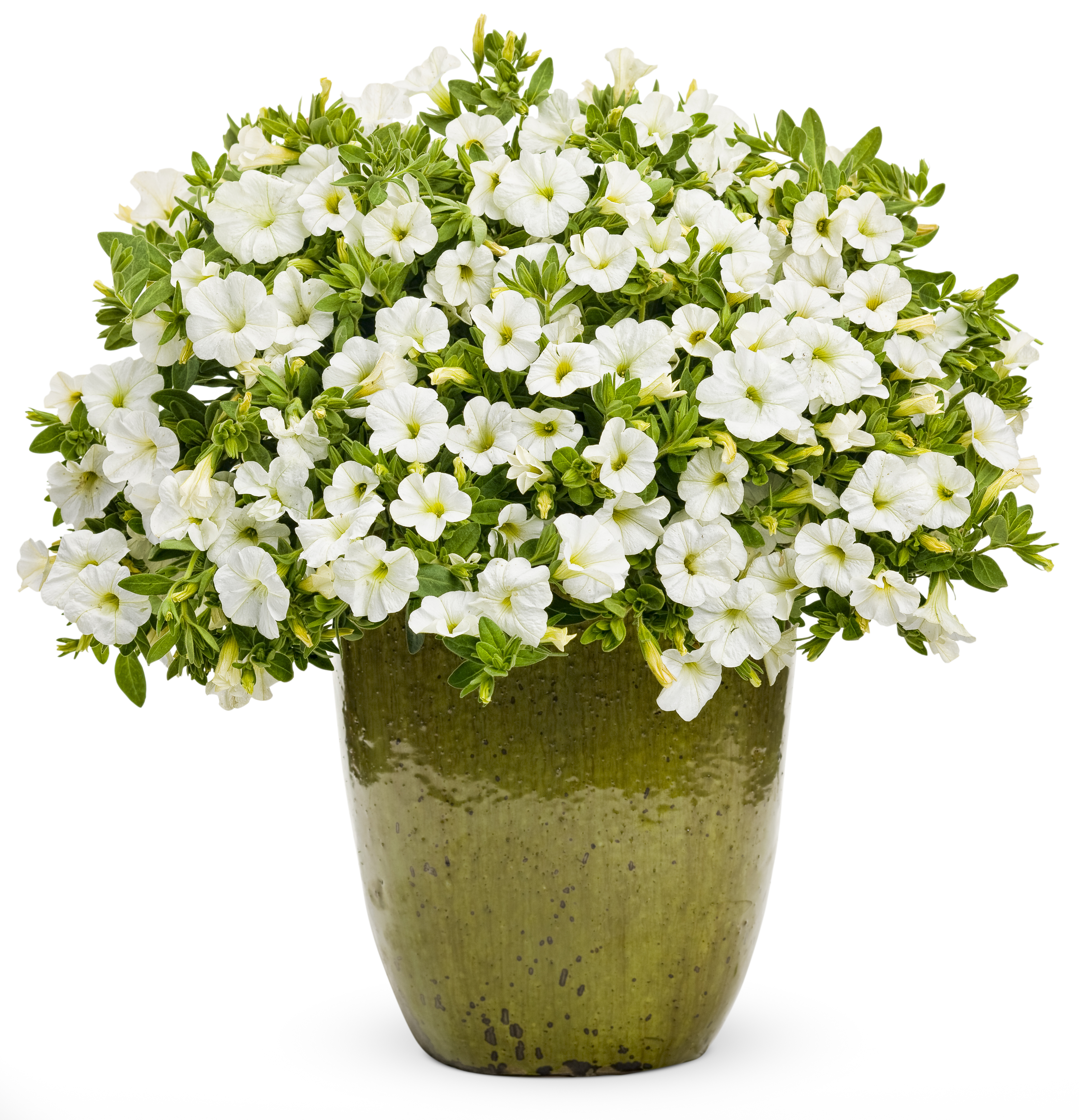 Flower Pots With Flowers Png Flower pot pla - Flower Pot PNG