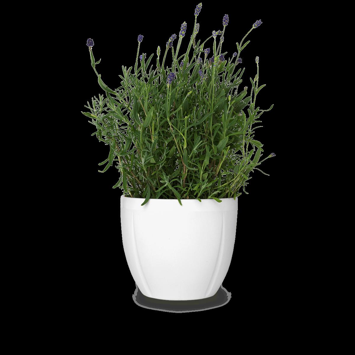 Gc-flowerpot-oe16-cm-grand-cru PlusPng.com  - Flower Pot PNG