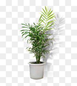Potted, Potted, Flower Pot, Greenery PNG Image - Flower Pot PNG