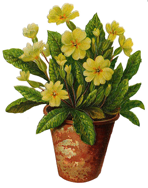 Primroses In A Flower Pot Free PNG Image - Flower Pot PNG