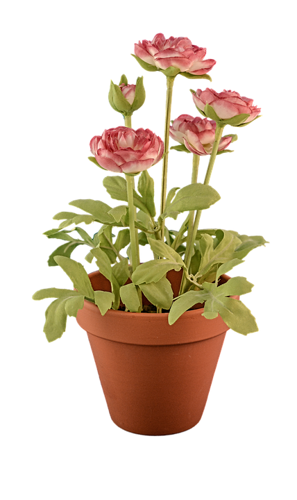 Transparent, Transparent Background, Flowerpot, Fake - Flower Pot PNG